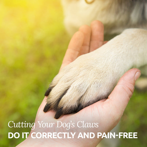 cutting your dog's claws