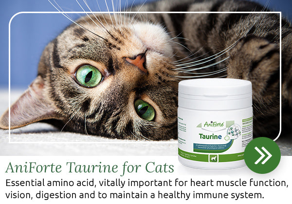 Taurine for cats