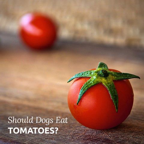 should dogs eat tomatoes