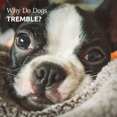 why dogs tremble