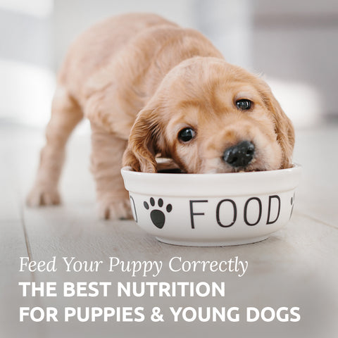 feeding puppies properly