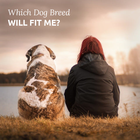 which dog will fit me best