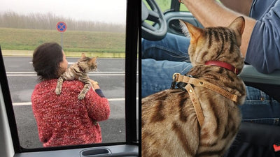 9 things we learned from our first taste of van life with a cat