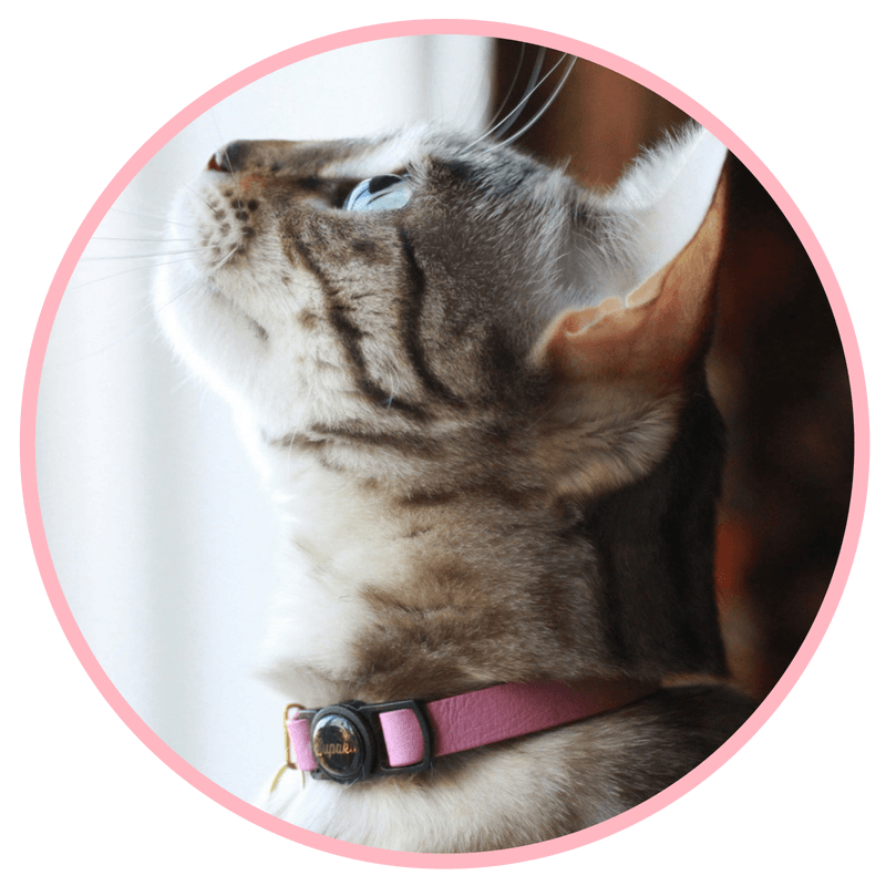 Cat collars that stay on