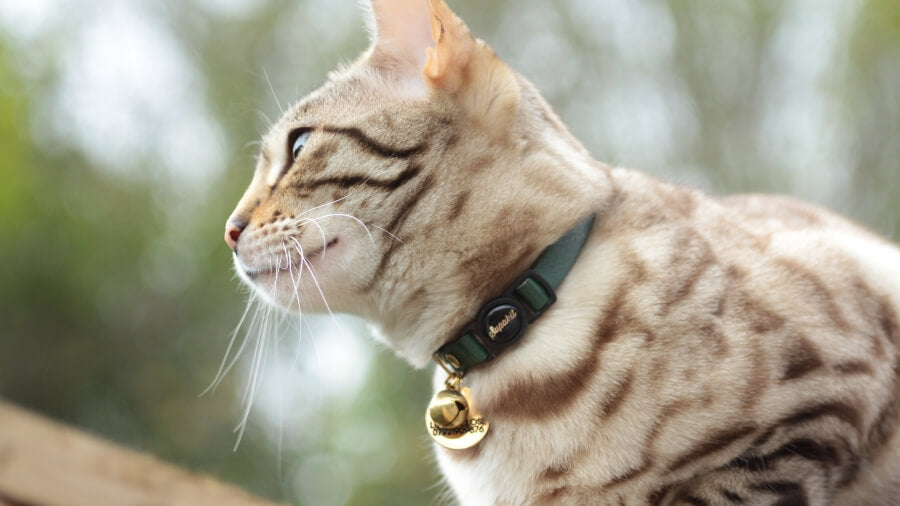 Do cat collar bells stop bird catching