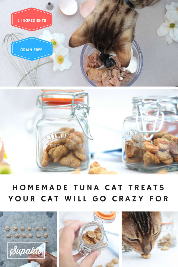 Homemade Tuna Cat Treats Your Cat Will Go Crazy For