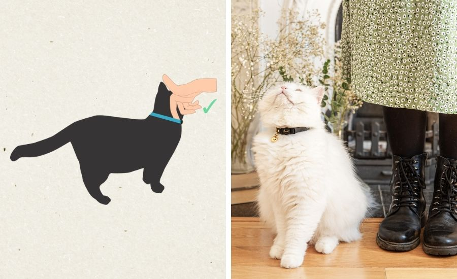 How tight should a cat collar be?