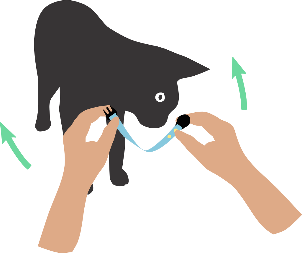 Putting a cat collar on your cat