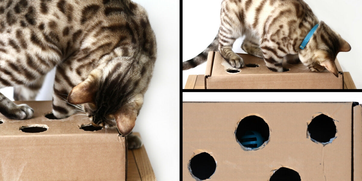 3 Free and Simple Ways to Keep Kitty Entertained While You're Busy