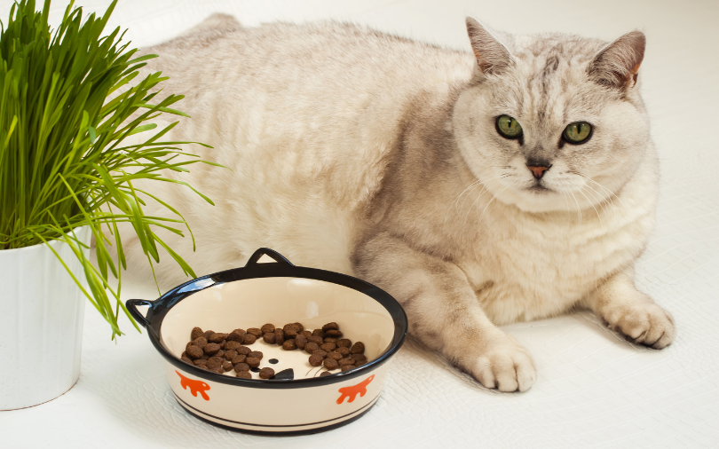 cat on a diet