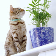 Green cat collar - Supakit