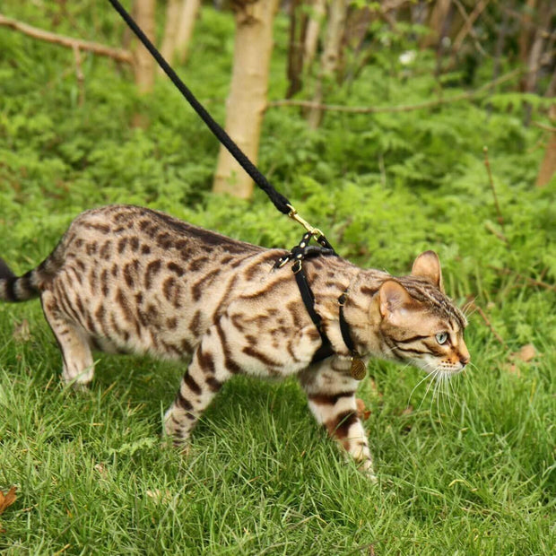 Kitten harness and leash by Supakit