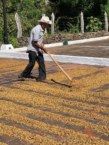 honey procesing dry beds