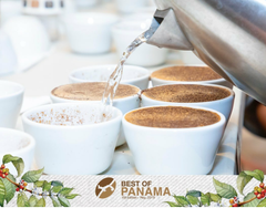 cupping best of panama