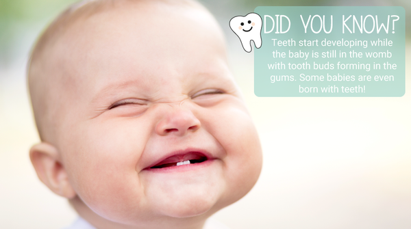 Did you know? Teething