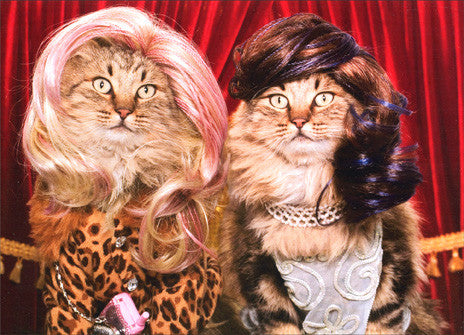 CAT GREETING CARDS (Cats in Wigs)