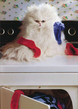 CAT GREETING CARDS (Laundry Cat)