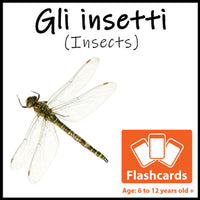 Insects Flash Cards x 28 - Full Set