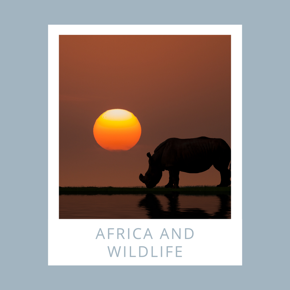 Africa and wildlife