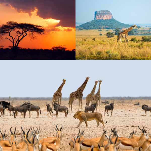 Africa and wildlife - THE SPACE gallery