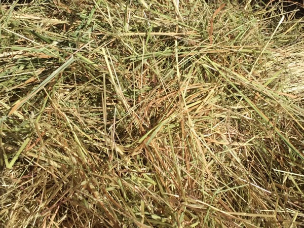 Clean Pasture Hay (small squares)