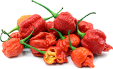Carolina Reaper Chilli Pepper