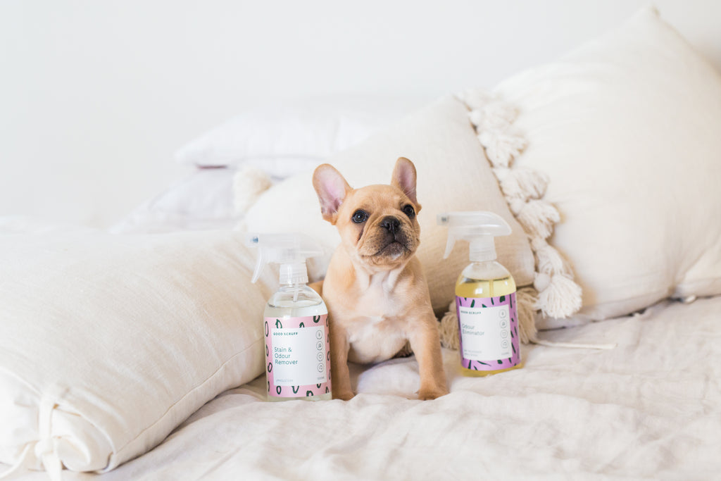 Why You NEED To Use Eco Friendly Cleaning Products Around Your Pets
