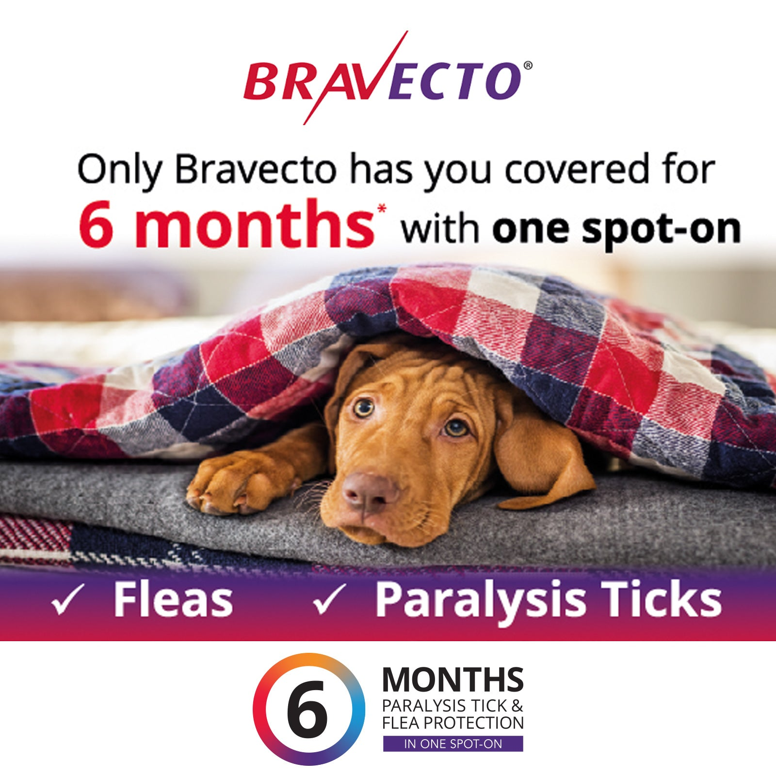 Bravecto Spot On For Dogs Green 10-20kg