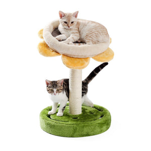 Cute Sunflower Cat Climbing Tree With Toy