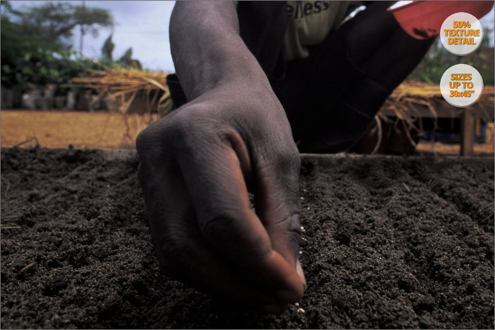 Man planting seeds, Mangochi, Malawi. | 50% Magnification Detail.
