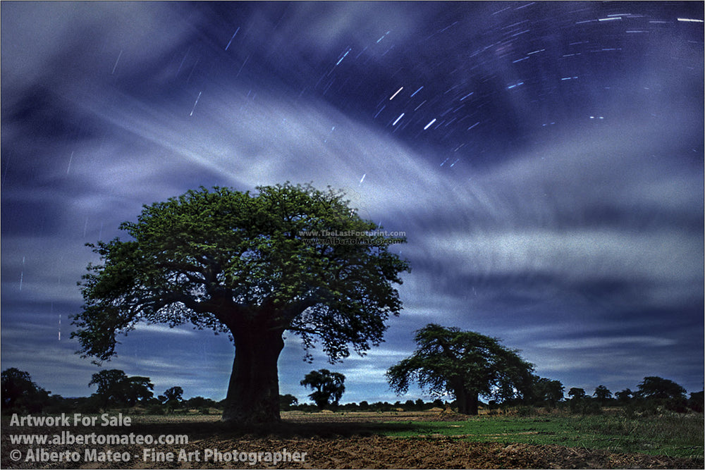 Baobabs under full moon, Mangochi, Malawi. | By Alberto Mateo, Fine Art Photographer.