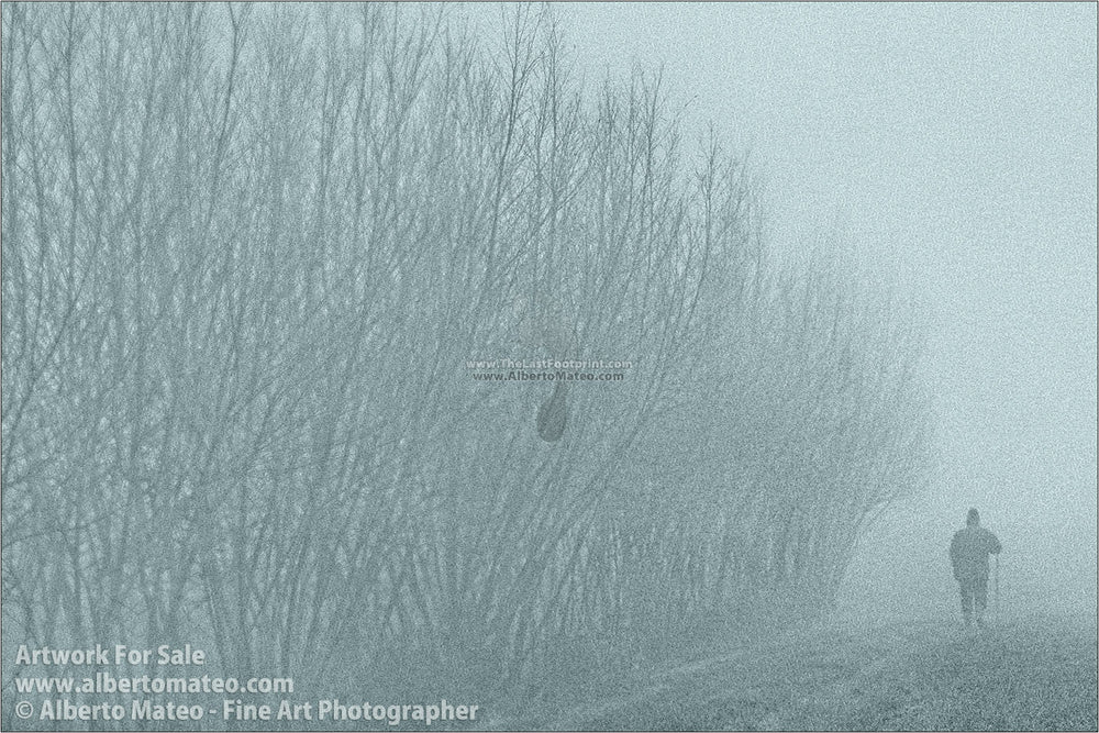 Fog in crop fields, Brugine, Italy. | Open Edition Print.