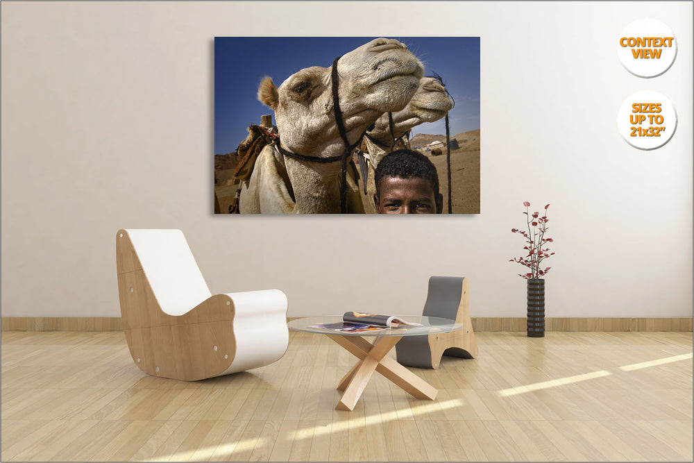 Bedouin boy with camels, Egypt. | Living room view.