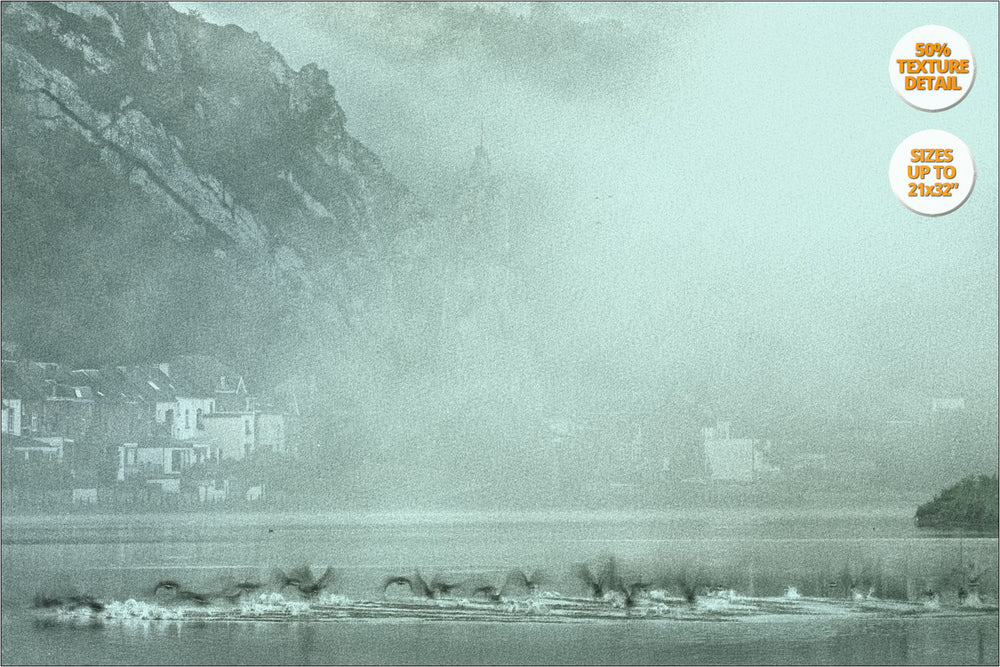 Flock of ducks, river Meuse, Dinant. | Detail at 50% Magnification.