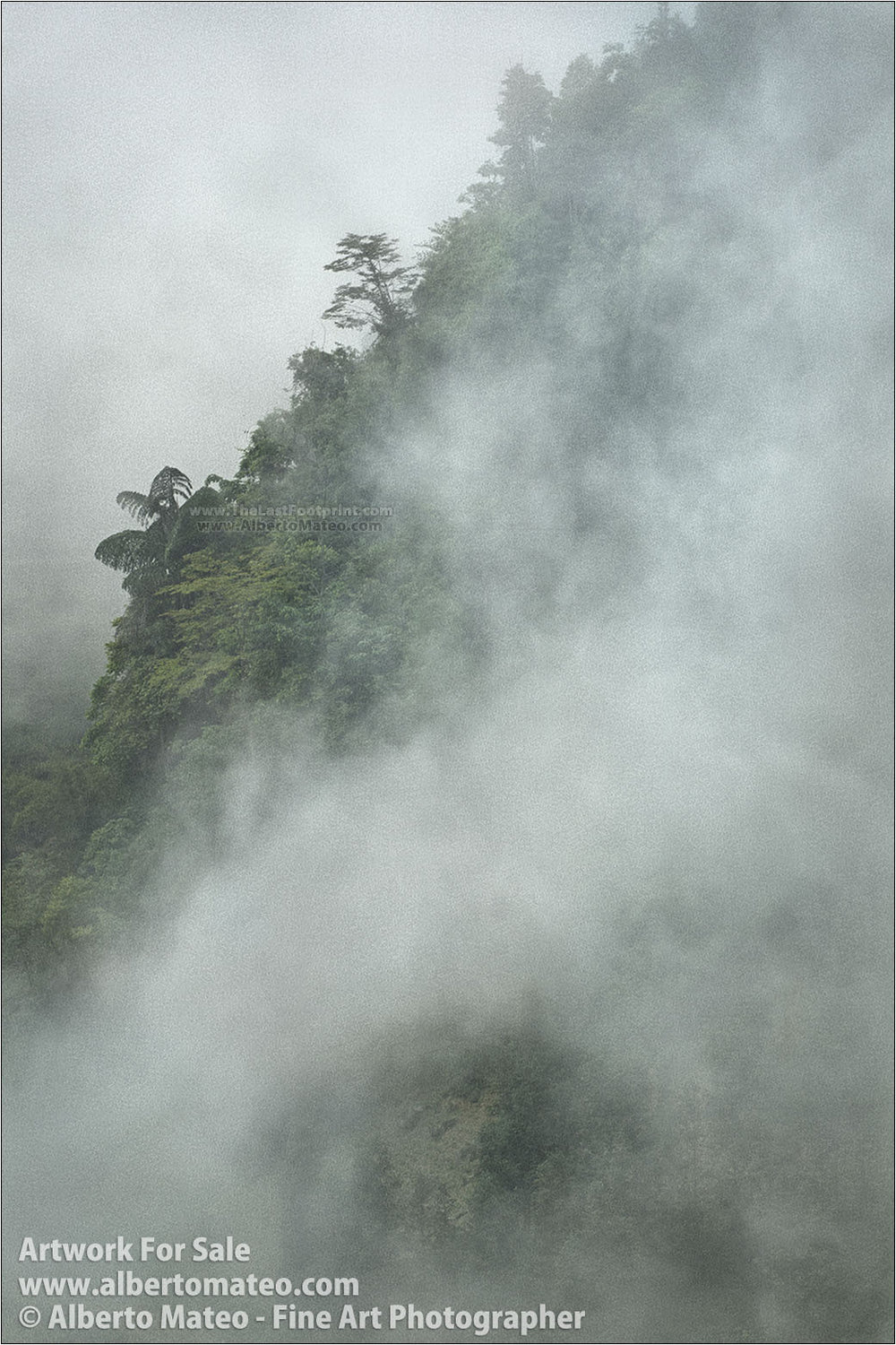 Tree in the fog, Bac Ha Mountains, Vietnam. | General view.
