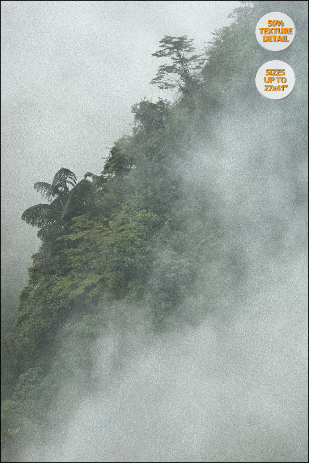 Tree in the fog, Bac Ha, Vietnam. | 50% Print Detail.