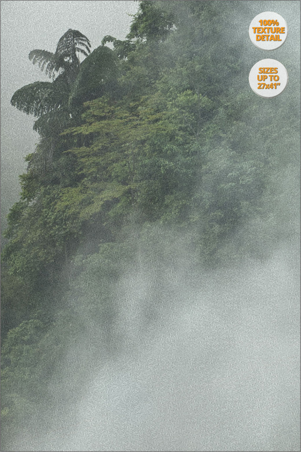 Tree in the fog, Bac Ha, Vietnam. | 100% Print Detail.