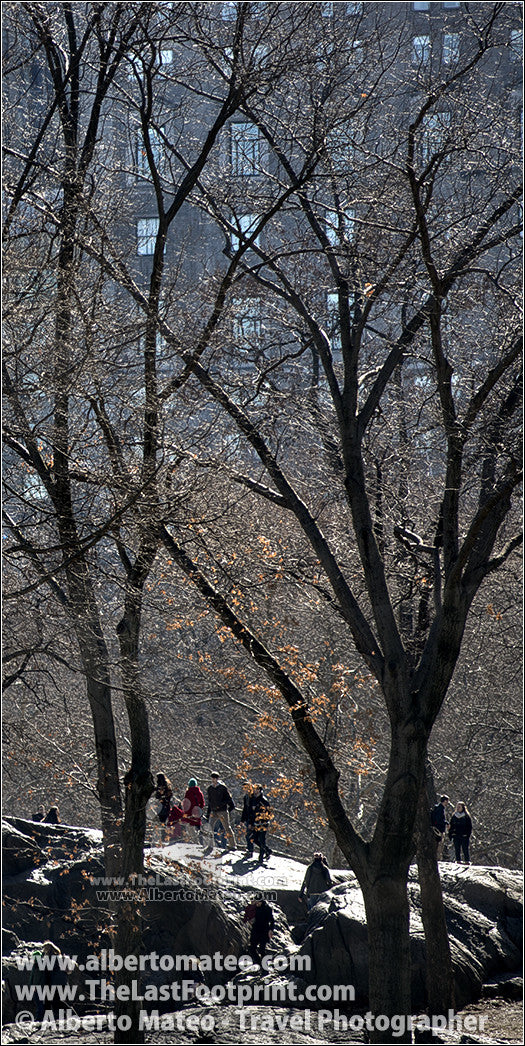 Tree shilouettes in Winter, Central Park, New York.