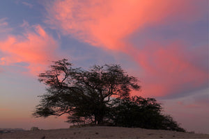 Bahrain's The Tree of Life