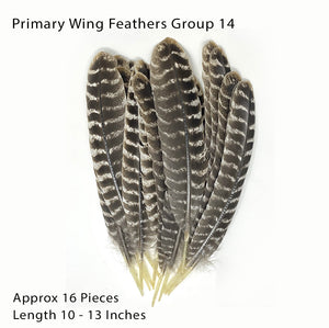 Texas Turkey Feathers