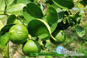 September's Spice of the Month: Kaffir Lime Leaves