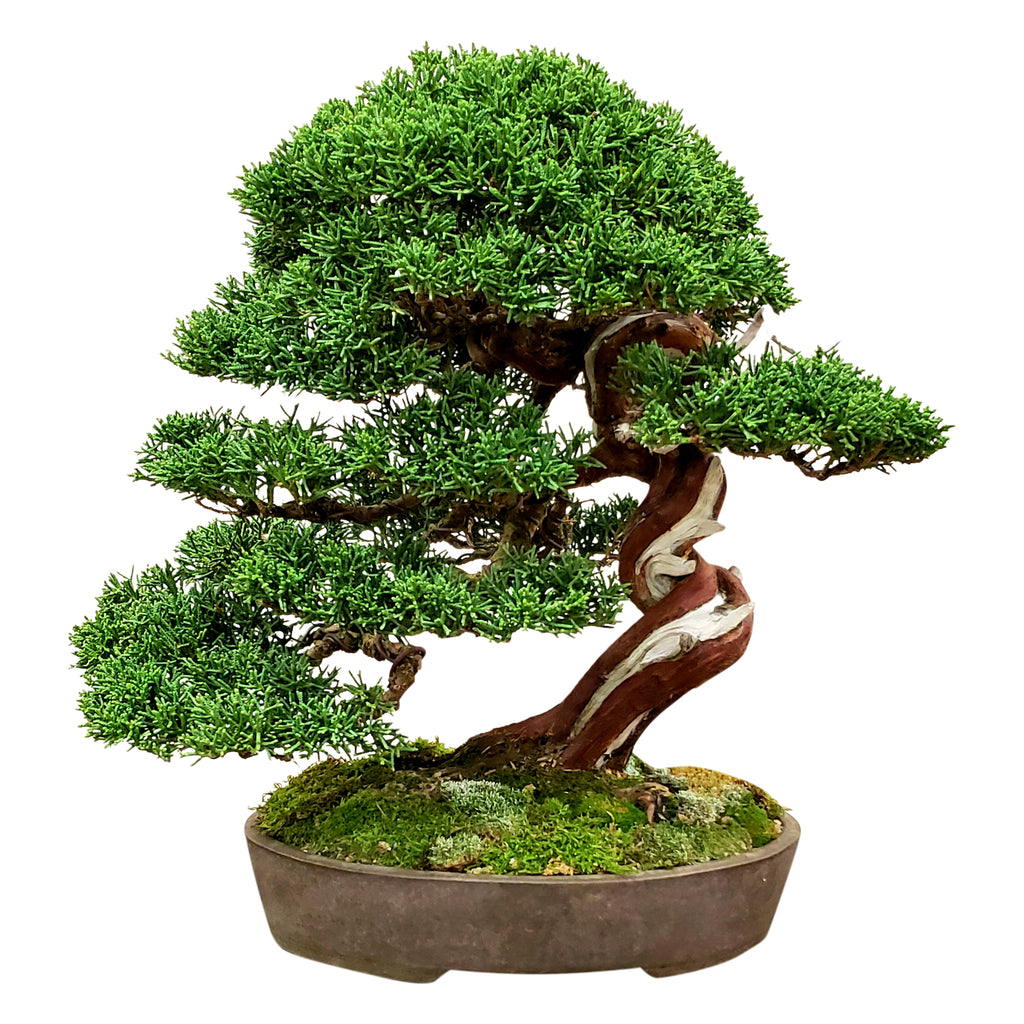 New Bonsai Customer Loyalty Program - Earn BONSAI POINTS