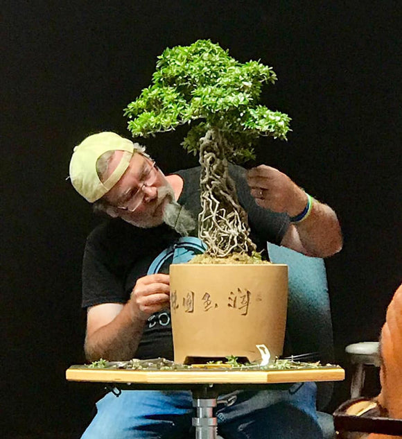 Satsuki Azalea Bonsai Care With Robert Mahler