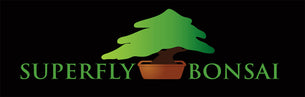 Superfly Bonsai