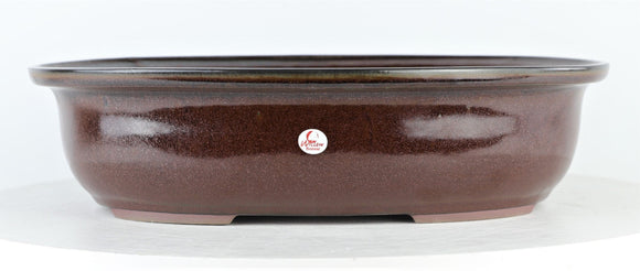 DK Honey Oval Fancy Large Bonsai Pot by Willow Bonsai - 12