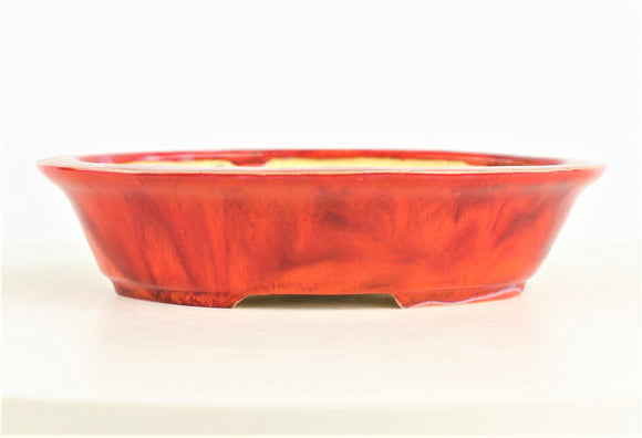 Roy Minarai Glazed Red Oval Bonsai Pot - 7