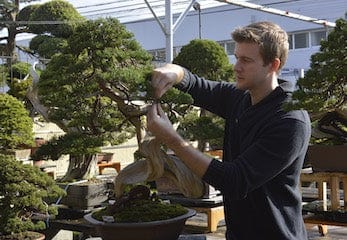 Bonsai Intermediate Course With Bjorn Bjorholm