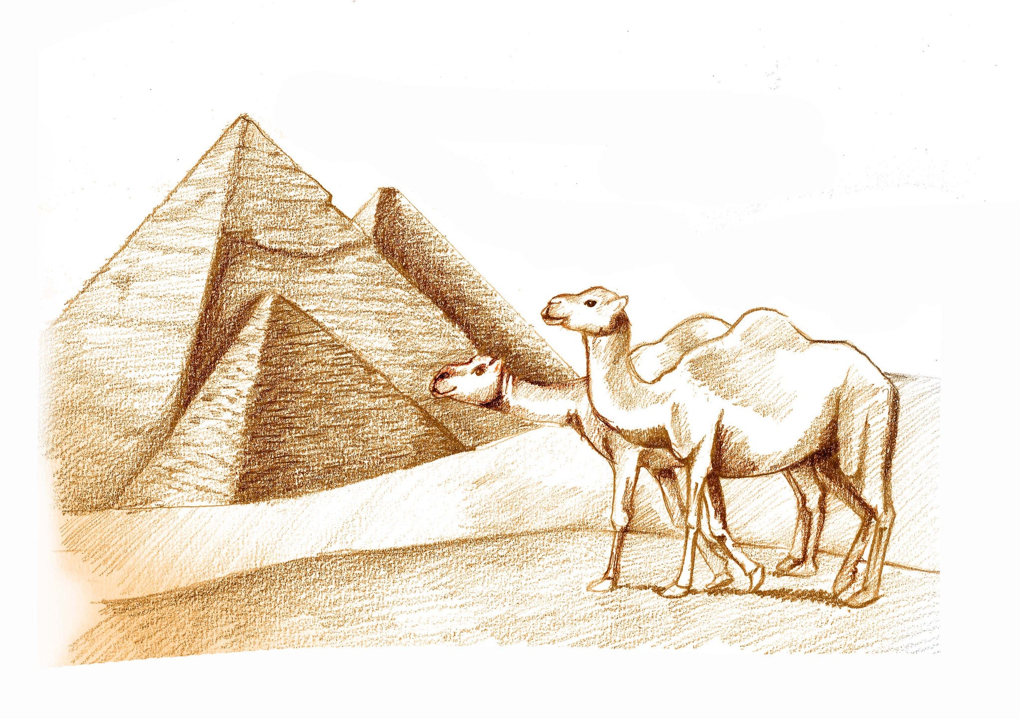 ExplorerHop.com  Mira & Teyus in Egypt.  Camels and Pyramids