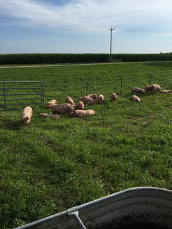 Farm Fresh Pork - Half Hog - Deposit