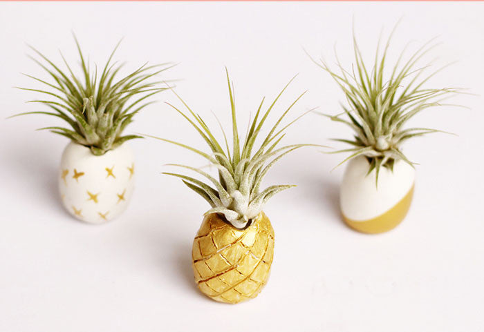 7 DIY Air Plant Holders